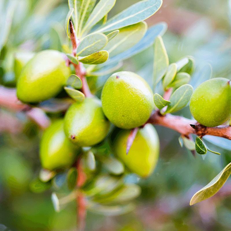 argan kernel oil